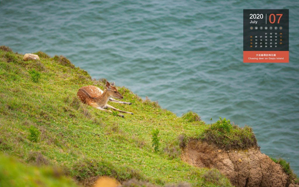 July - Chasing deer on Daqiu Island