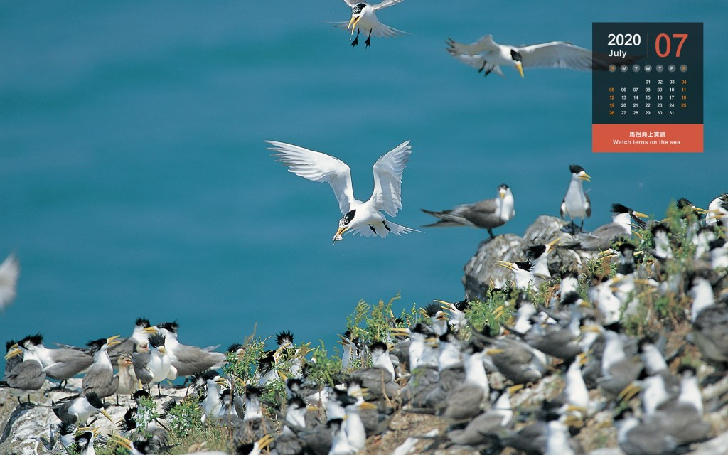 July - Watch terns on the sea